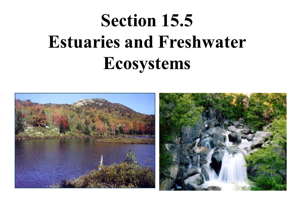 Estuaries and Freshwater Ecosystems