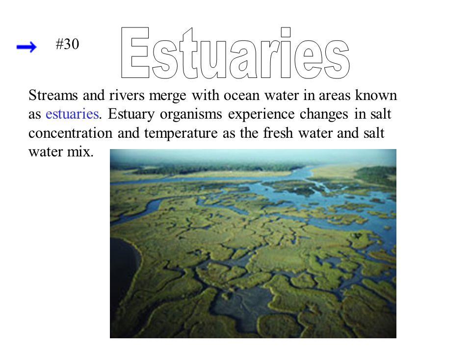 Estuaries #30.