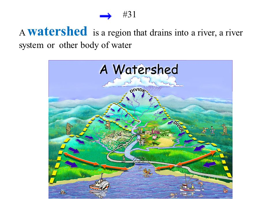 #31 A watershed is a region that drains into a river, a river system or other body of water