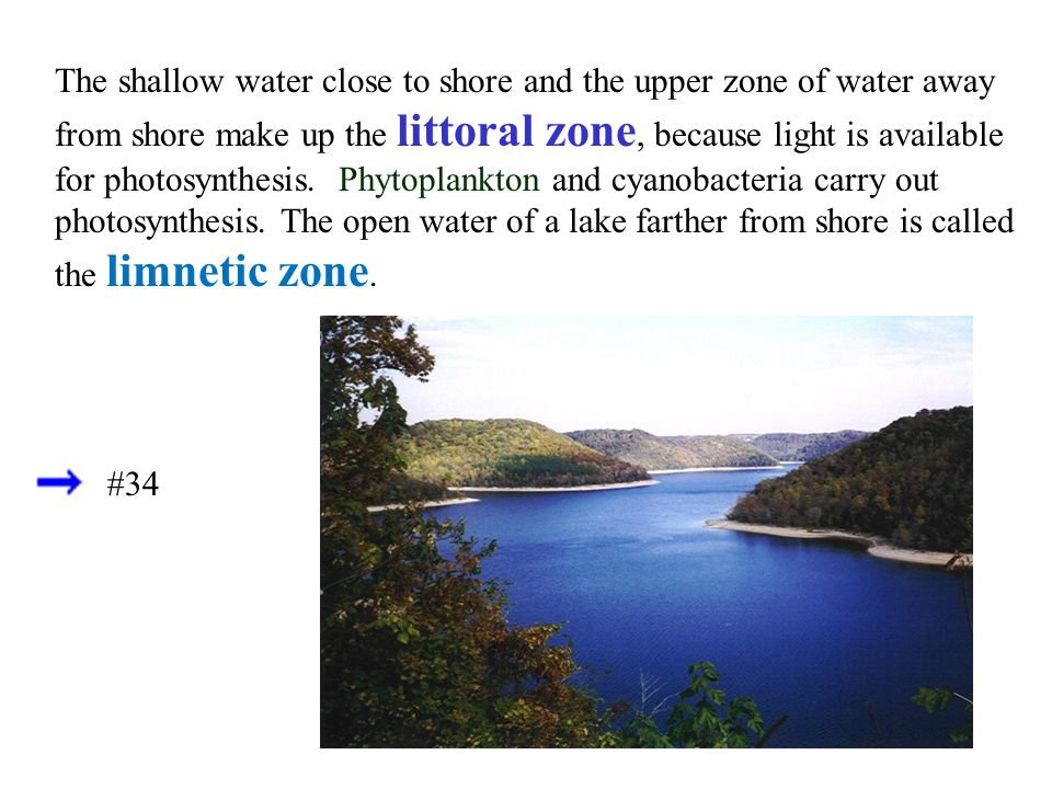 The shallow water close to shore and the upper zone of water away from shore make up the littoral zone, because light is available for photosynthesis. Phytoplankton and cyanobacteria carry out photosynthesis. The open water of a lake farther from shore is called the limnetic zone.