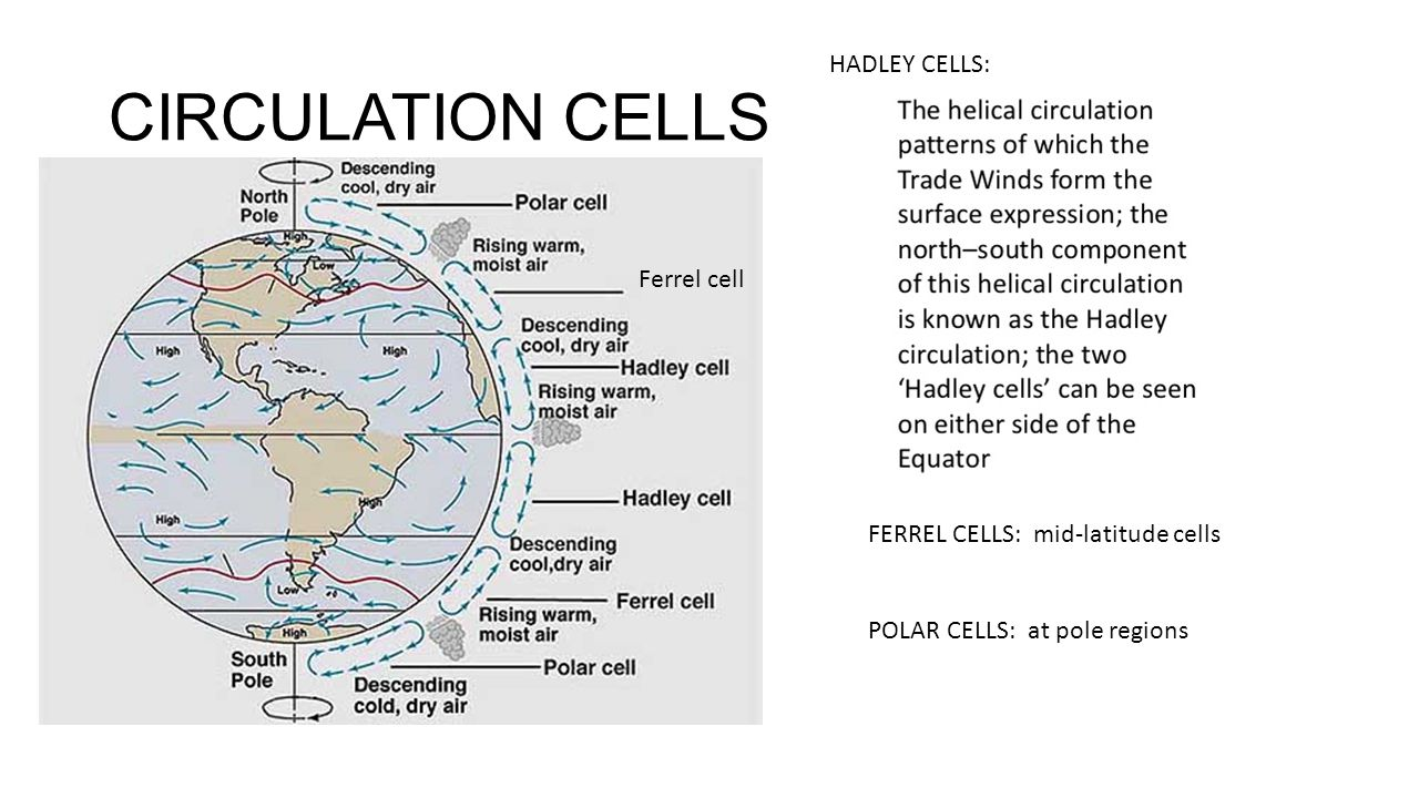 CIRCULATION CELLS HADLEY CELLS: Ferrel cell