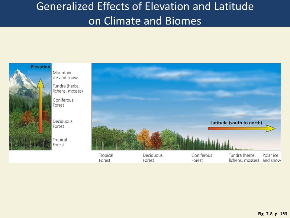 Generalized Effects of Elevation and Latitude
