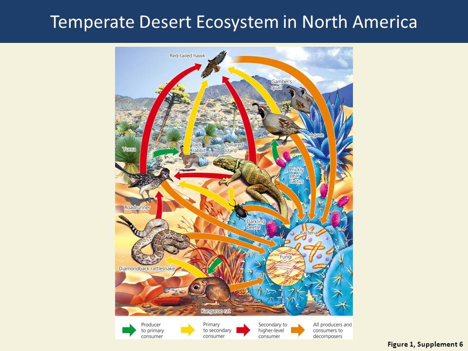 Temperate Desert Ecosystem in North America