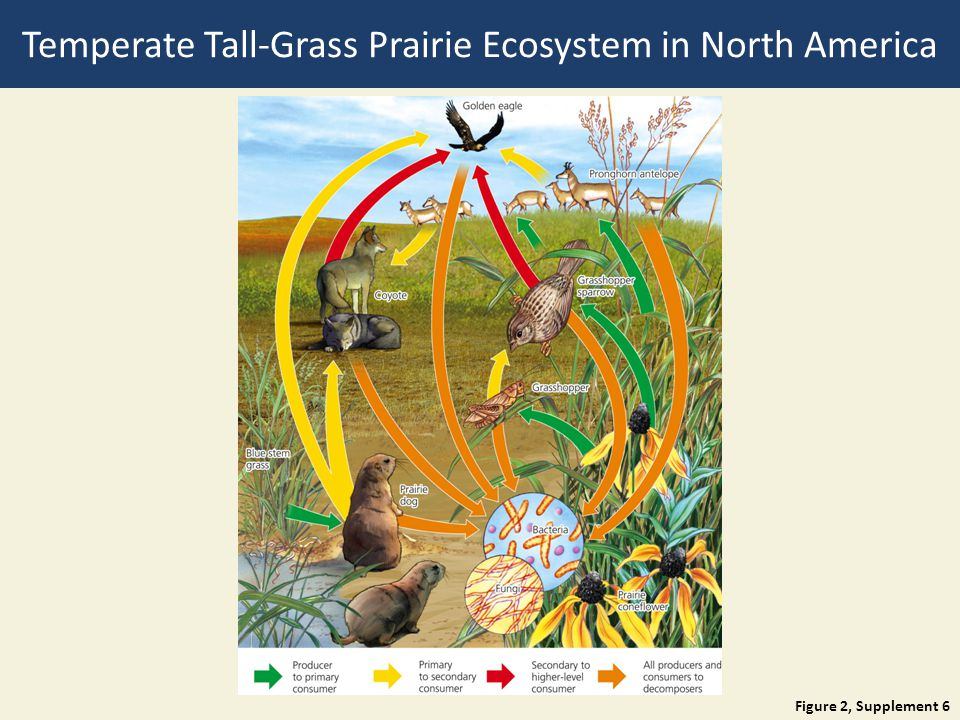Temperate Tall-Grass Prairie Ecosystem in North America
