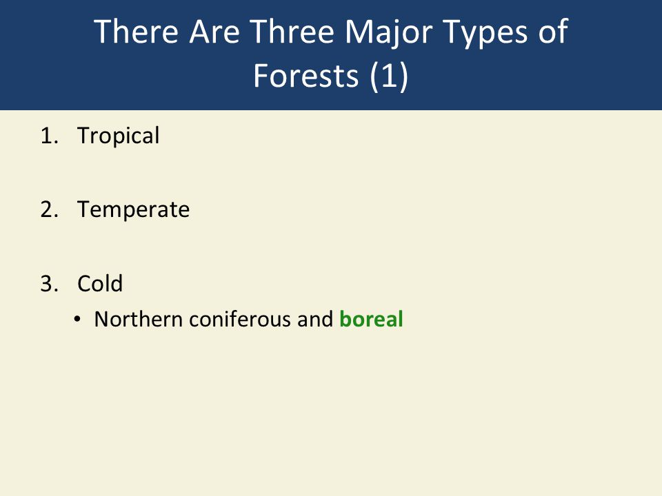 There Are Three Major Types of Forests (1)