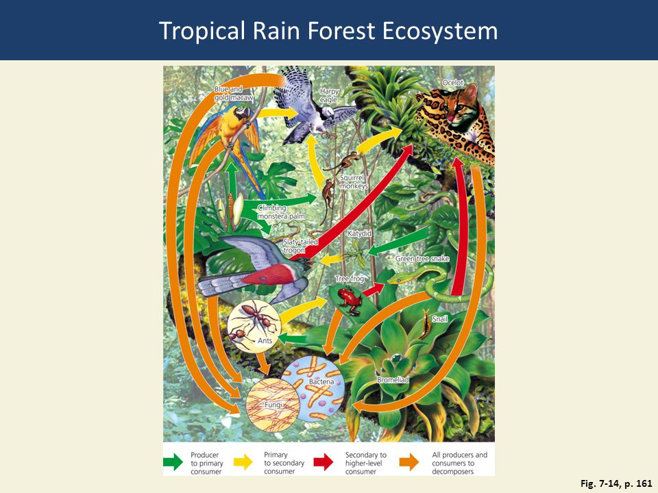 Tropical Rain Forest Ecosystem