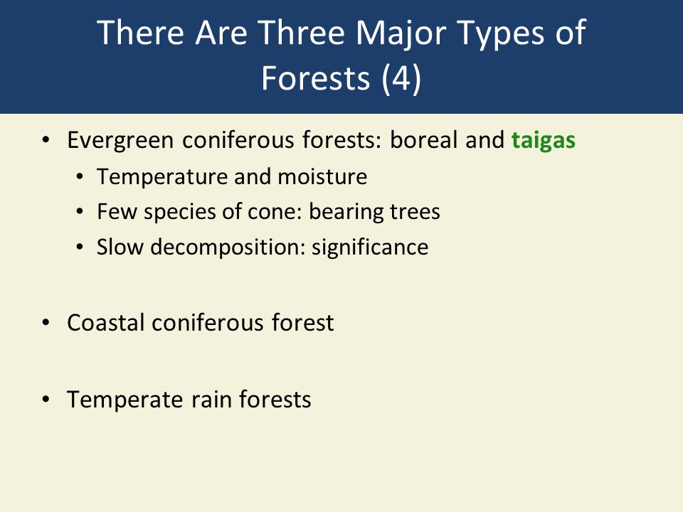 There Are Three Major Types of Forests (4)