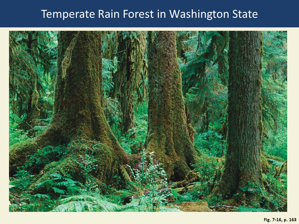 Temperate Rain Forest in Washington State