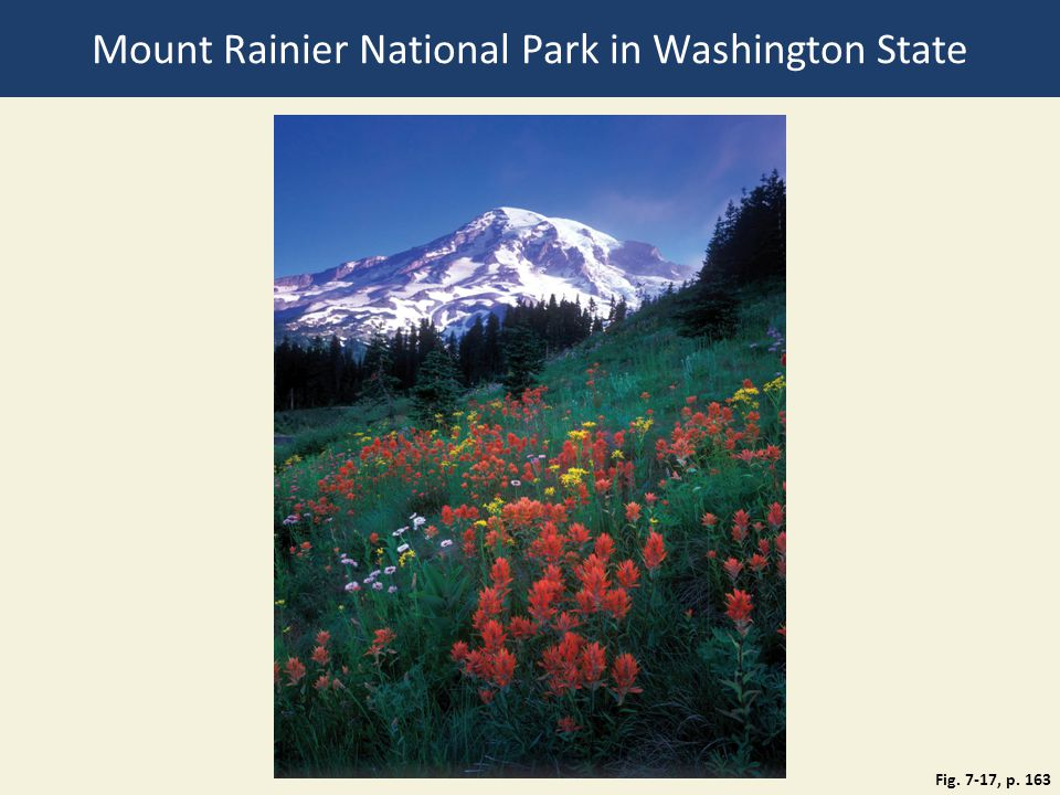 Mount Rainier National Park in Washington State