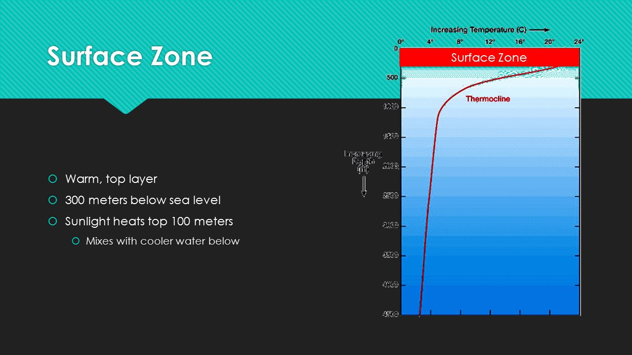 Surface Zone Surface Zone Warm, top layer 300 meters below sea level
