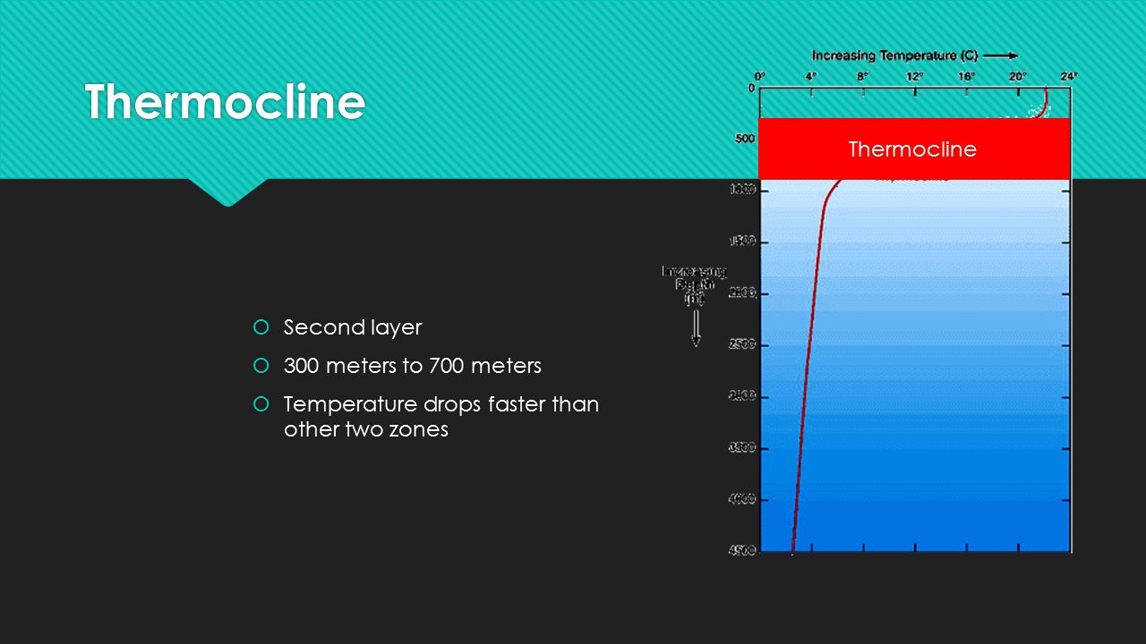 Thermocline Thermocline Second layer 300 meters to 700 meters