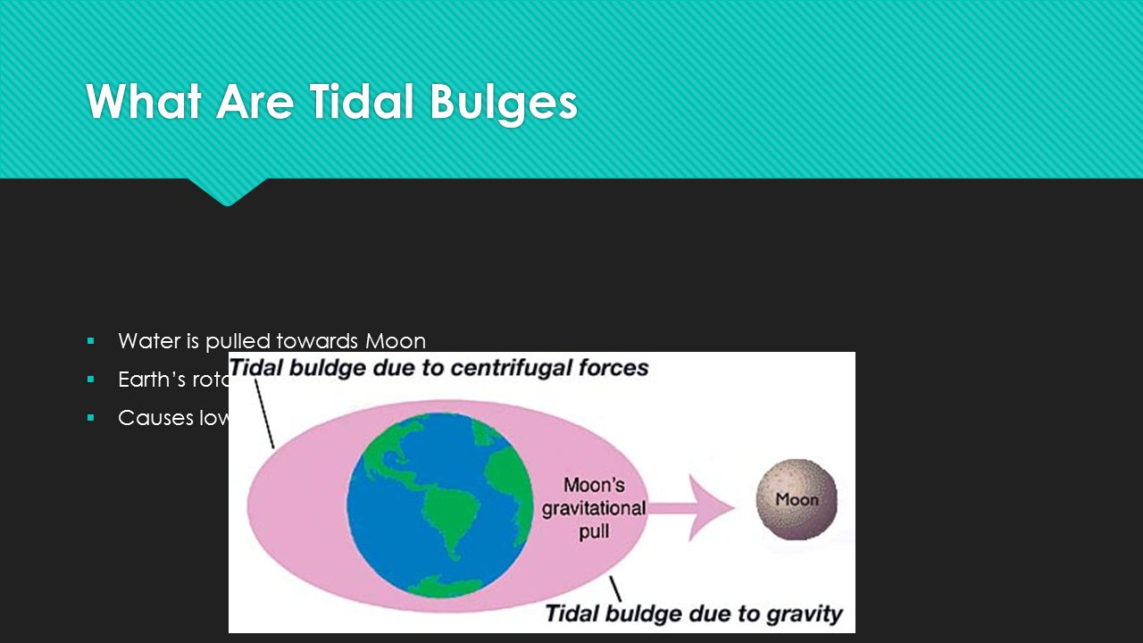 What Are Tidal Bulges Water is pulled towards Moon