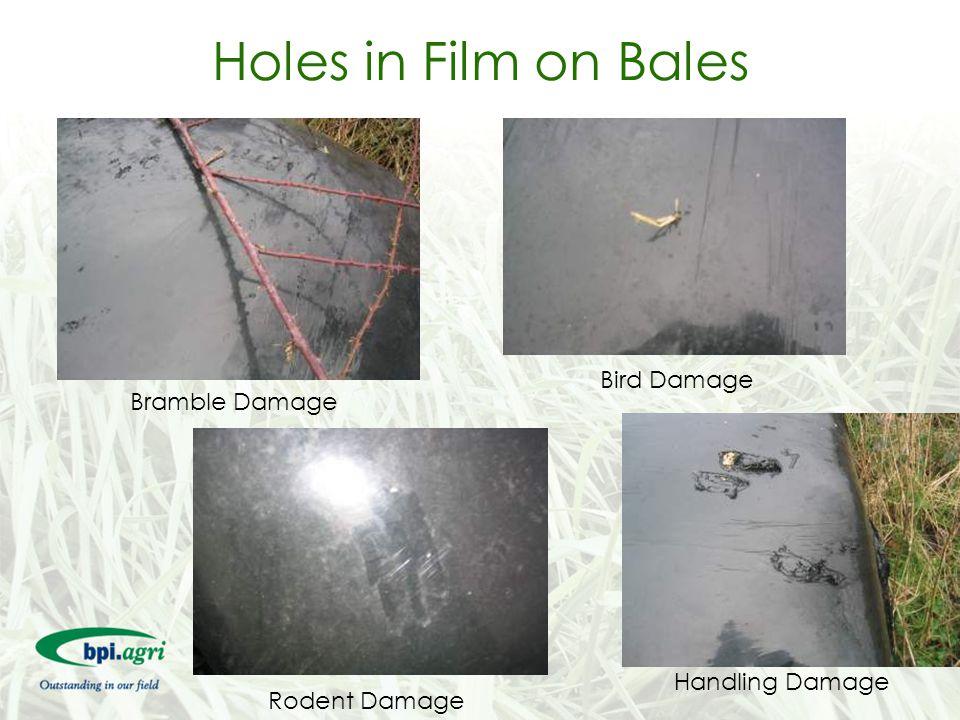 Holes in Film on Bales Bird Damage Bramble Damage Handling Damage