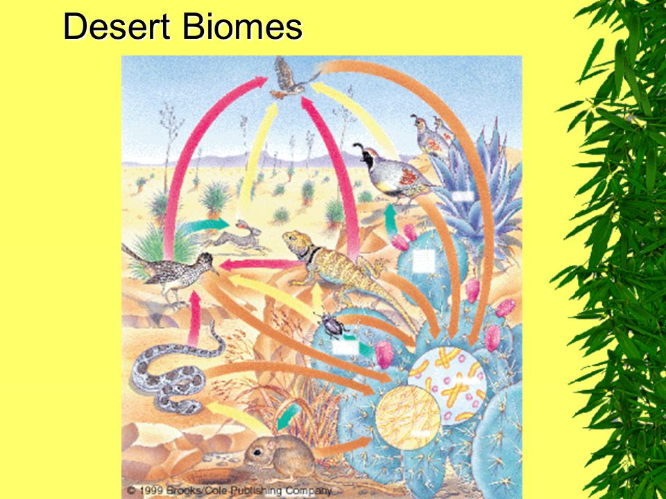 Desert Biomes Fig. 7–15