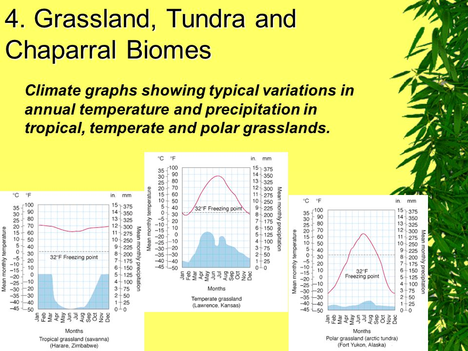 4. Grassland, Tundra and Chaparral Biomes