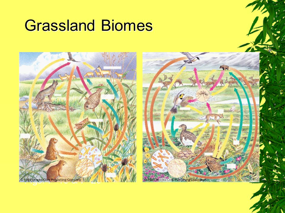 Grassland Biomes Figs. 7–19 & 7–20