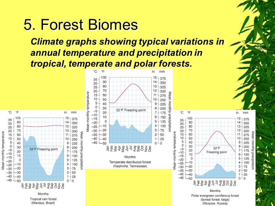 5. Forest Biomes Climate graphs showing typical variations in annual temperature and precipitation in tropical, temperate and polar forests.