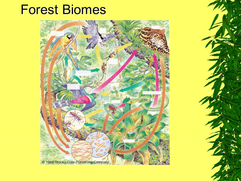 Forest Biomes Fig. 7–23
