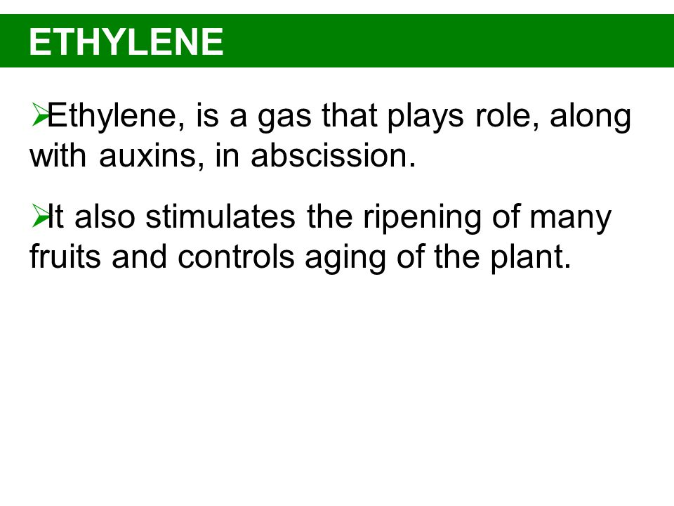 ETHYLENE Ethylene, is a gas that plays role, along with auxins, in abscission.