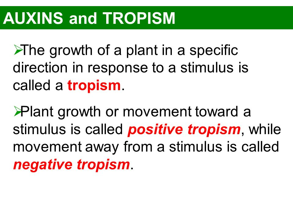 AUXINS and TROPISM The growth of a plant in a specific direction in response to a stimulus is called a tropism.