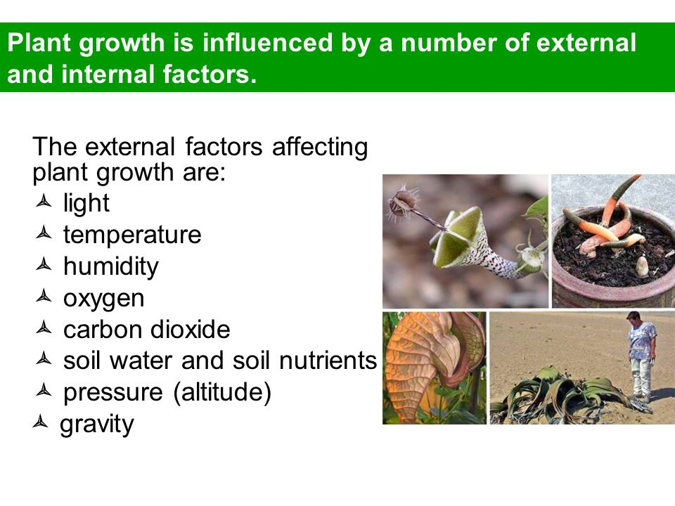 REGULATION OF PLANT GROWTH - ppt video online download
