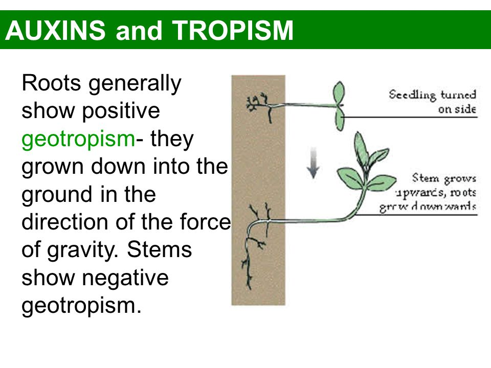 AUXINS and TROPISM