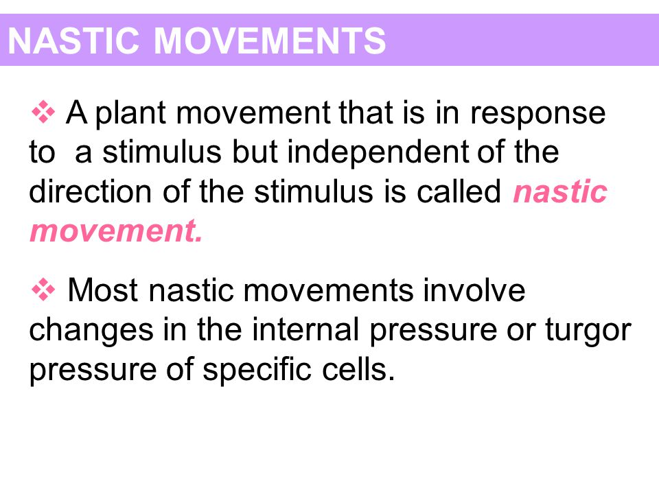 NASTIC MOVEMENTS A plant movement that is in response to a stimulus but independent of the direction of the stimulus is called nastic movement.