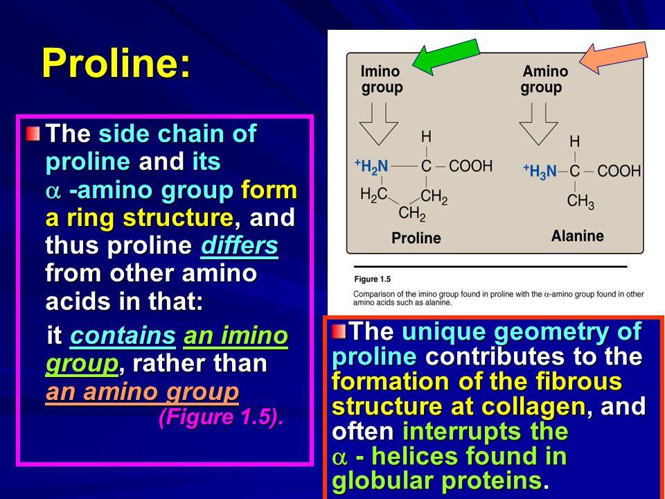 Proline: