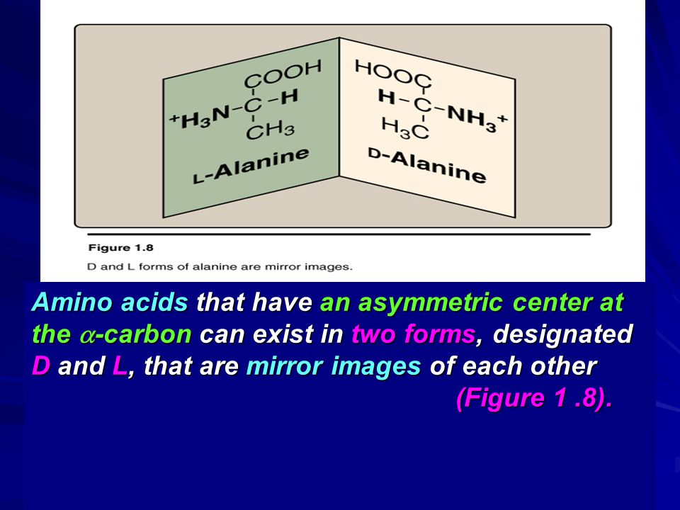 Amino acids that have an asymmetric center at the -carbon can exist in two forms, designated D and L, that are mirror images of each other