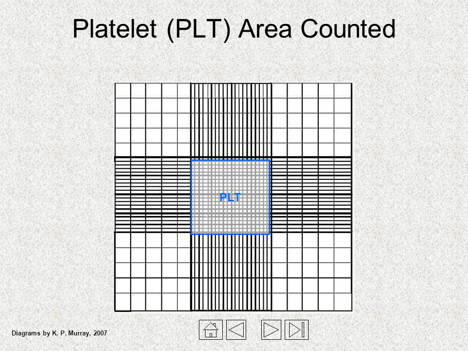 Platelet (PLT) Area Counted