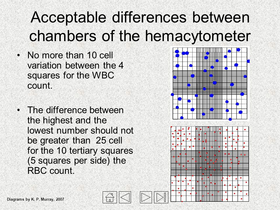 Hemacytometer and Manual Cell Counts - ppt video online ...