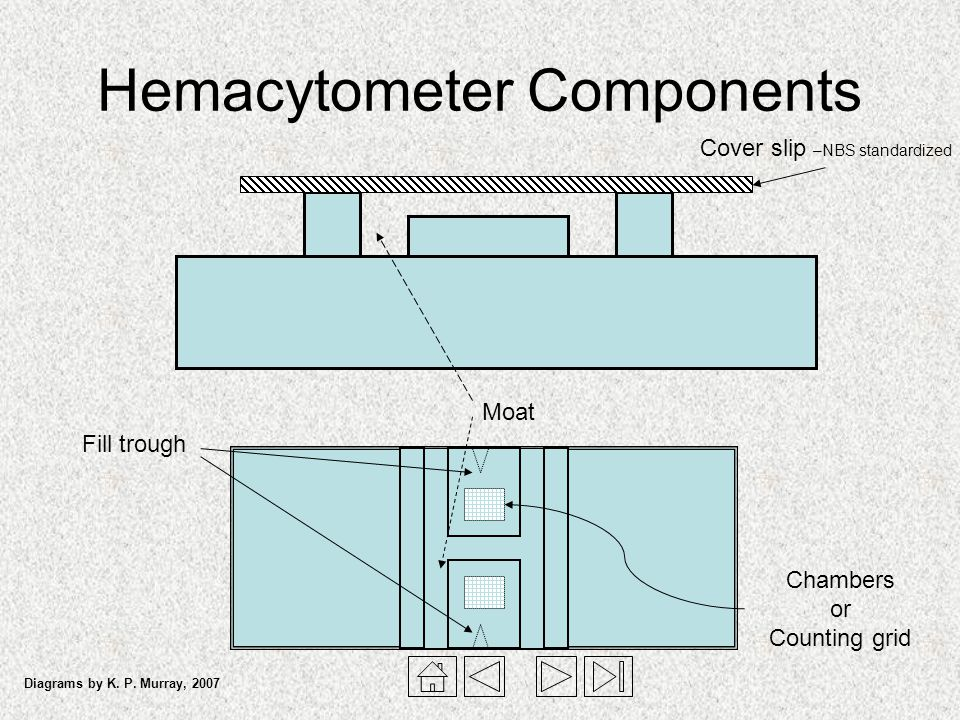 Hemacytometer Components