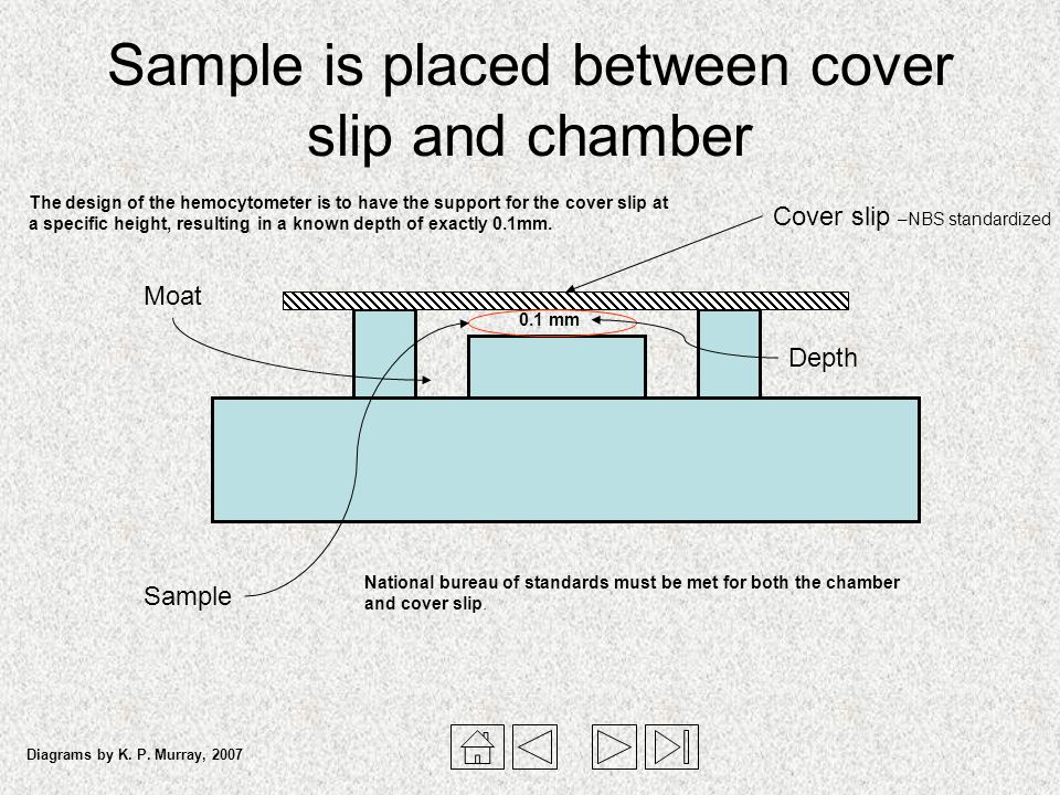 Sample is placed between cover slip and chamber