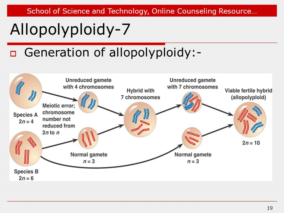 Dec 18, 2007 Allopolyploidy-7 Generation of allopolyploidy:-