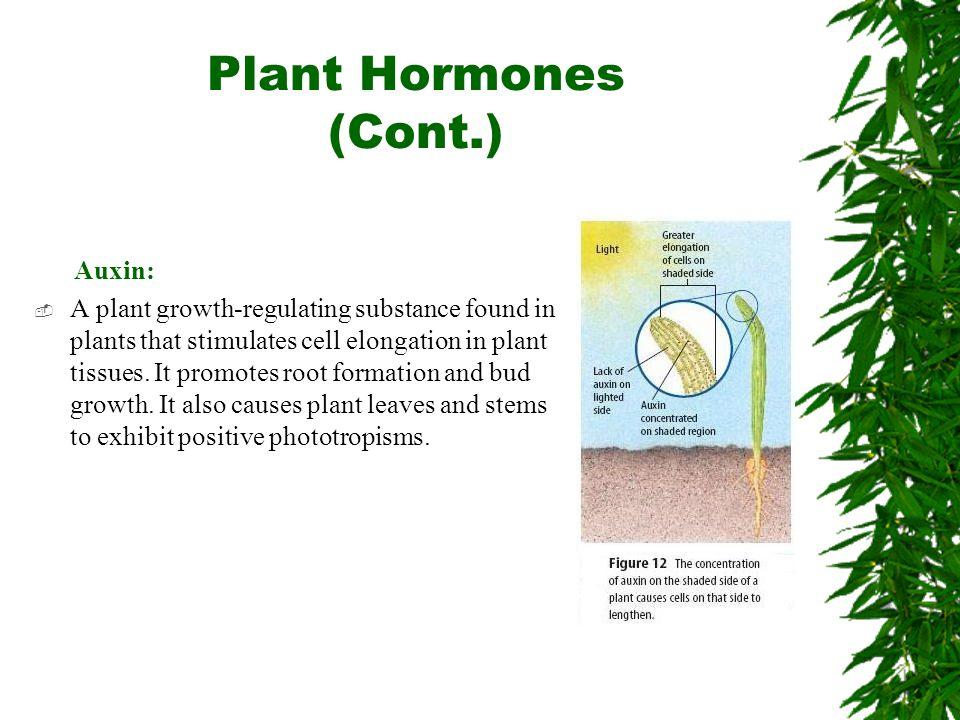 Plant Hormones (Cont.) Auxin: