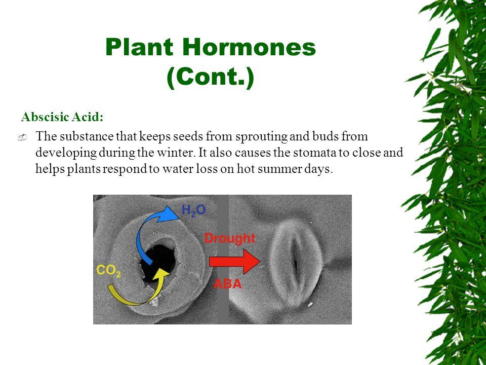Plant Hormones (Cont.) Abscisic Acid: