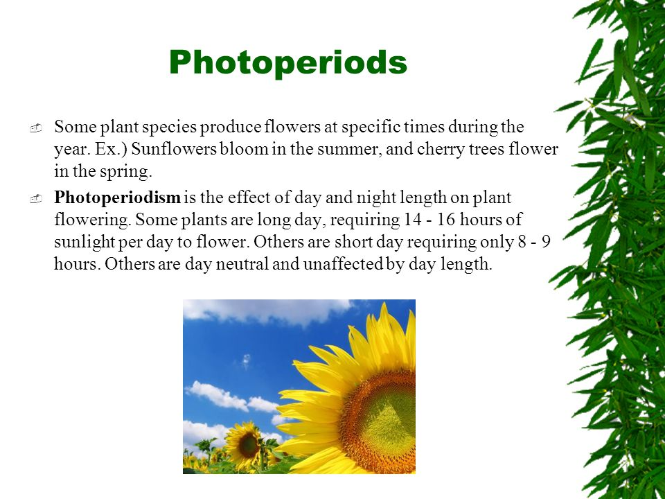 Photoperiods