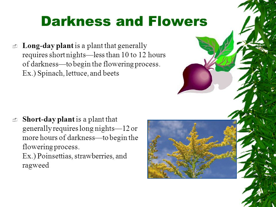 Darkness and Flowers