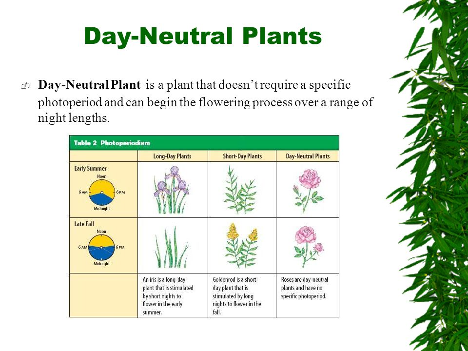 Day-Neutral Plants