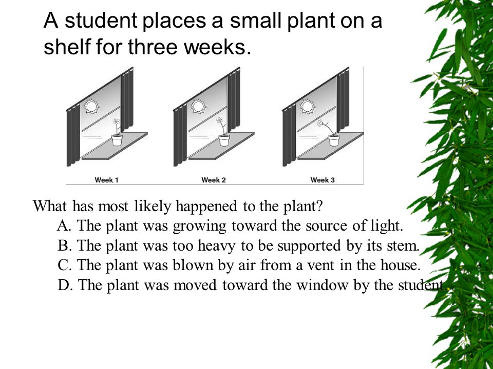 A student places a small plant on a shelf for three weeks.