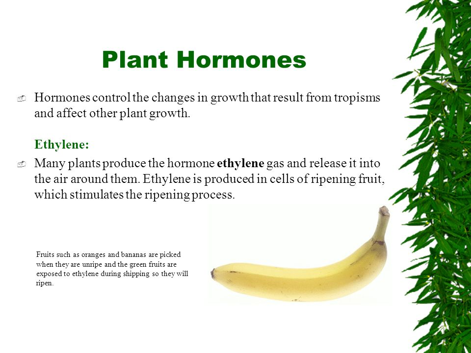 Plant Hormones Hormones control the changes in growth that result from tropisms and affect other plant growth. Ethylene: