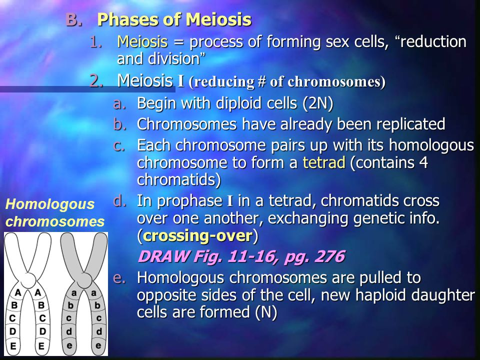 Meiosis I (reducing # of chromosomes)