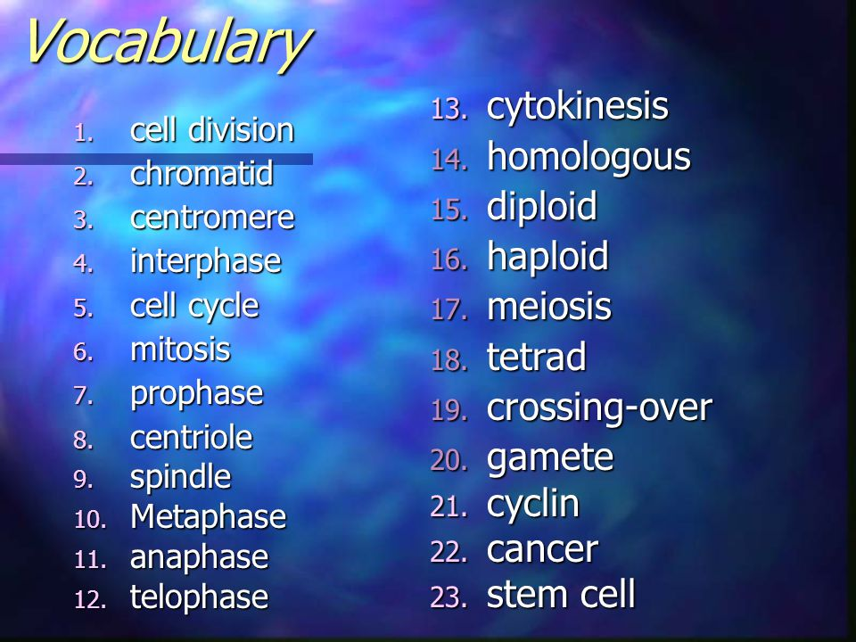 Vocabulary cytokinesis homologous diploid haploid meiosis tetrad