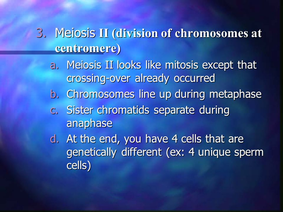 Meiosis II (division of chromosomes at centromere)