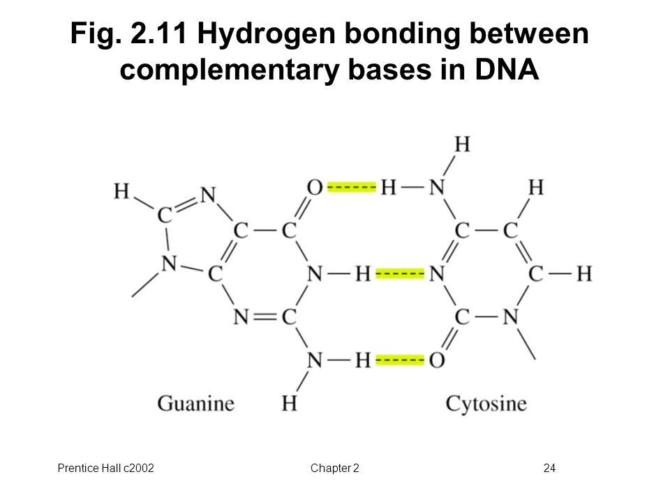 Fig. 2.11 Hydrogen bonding between complementary bases in DNA