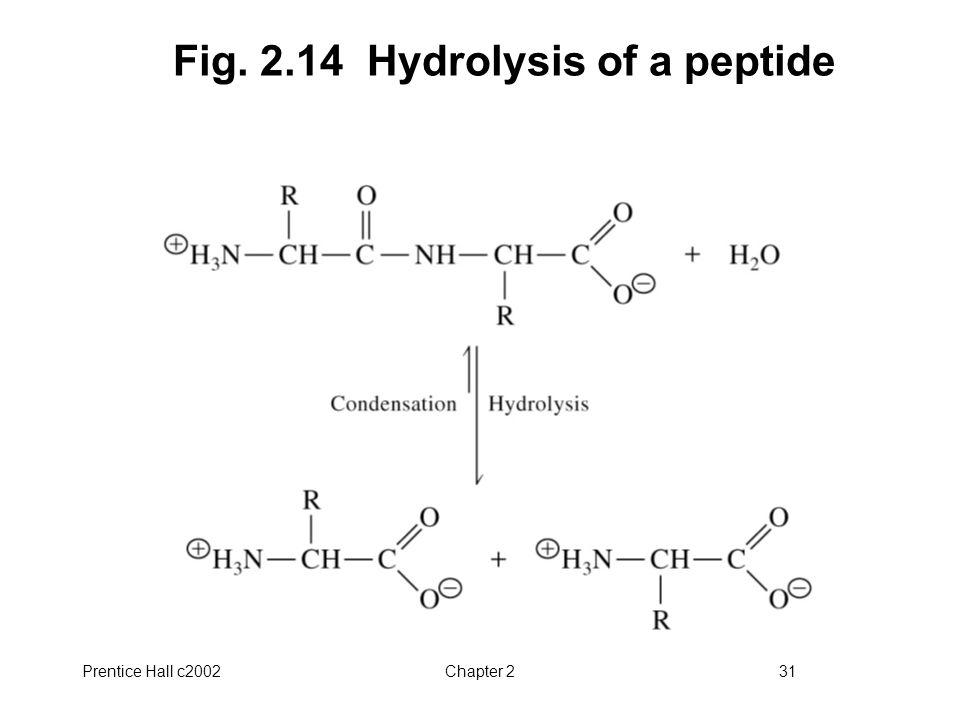 Fig. 2.14 Hydrolysis of a peptide
