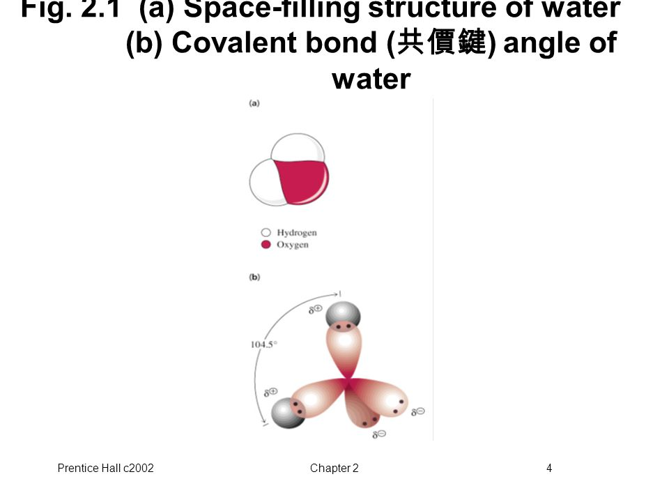 Fig. 2.1 (a) Space-filling structure of water (b) Covalent bond (共價鍵) angle of water