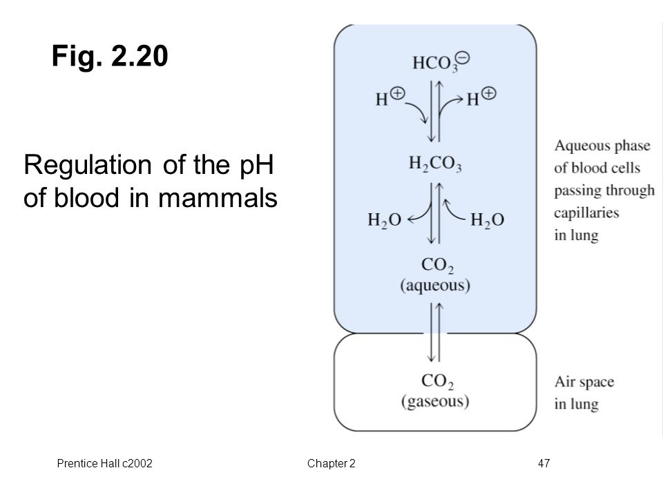 Fig. 2.20 Regulation of the pH of blood in mammals Prentice Hall c2002