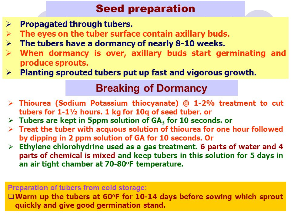 Seed preparation Breaking of Dormancy Propagated through tubers.