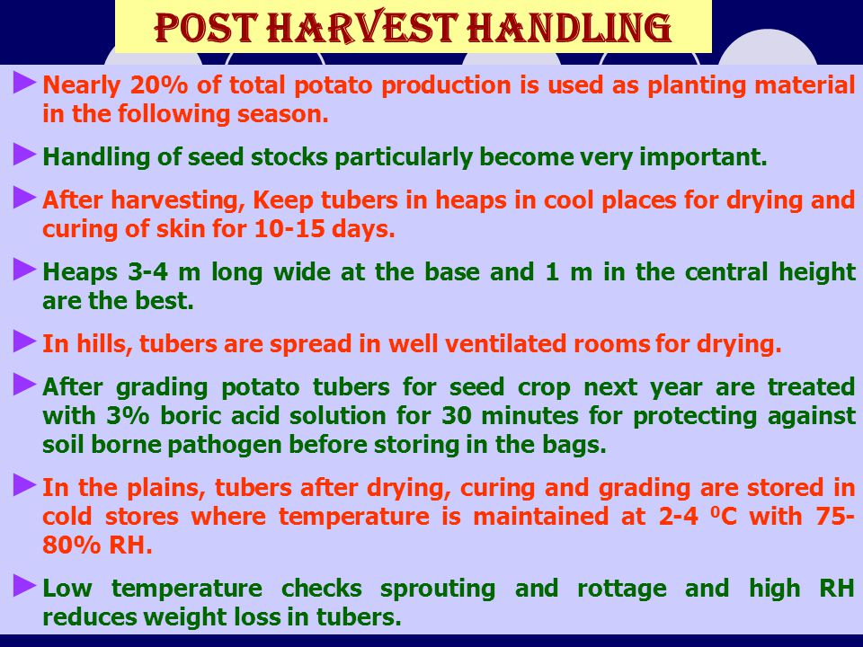 Post harvest handling Nearly 20% of total potato production is used as planting material in the following season.